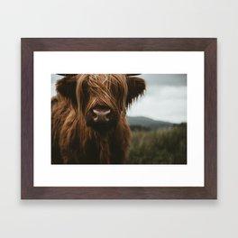 Scottish Highland Cattle Framed Art Print