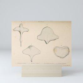 W Sidney Berridge - A Book of Whales (1900) - Figure 10: Breast Bones of Whalebone Whales Mini Art Print