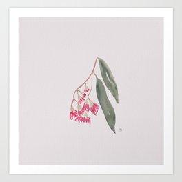 Flowering gum pink Art Print