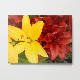 """""""A Gathering of Lilies"""" - 3 [D4468~49] Metal Print"""