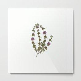 Wild violet flowers Metal Print