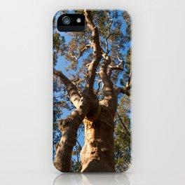 Scribbly Gum Tree, Muogamarra Reserve, Sydney iPhone Case