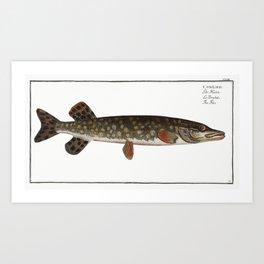 Pike (Esox Lucio) from Ichtylogie ou Histoire naturelle generale et particuliere des poissons (1785- Art Print