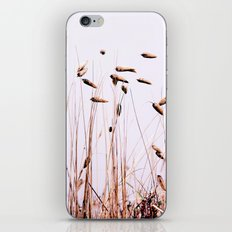 Reeds Plants iPhone & iPod Skin