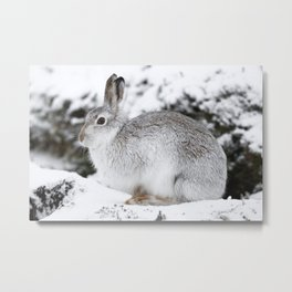 The white beast Metal Print