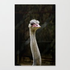 Sauve Ostrich Canvas Print