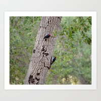 Woodpeckers in the forest Art Print