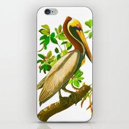 Brown Pelican Vintage Illustration iPhone Skin