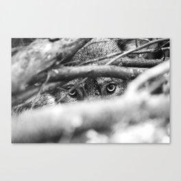 Wild Eyes Wolf Edition Canvas Print