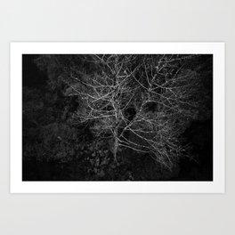 Tasmania Trees From Above Art Print