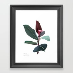Ficus Elastica Framed Art Print