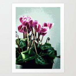 Cyclamen blossom II Art Print