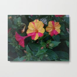 Bicolor flowers Metal Print