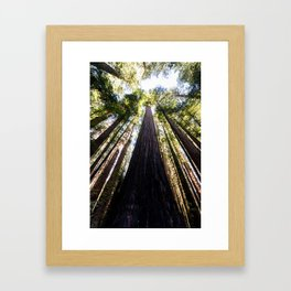 The Great Altar of the Church of the Redwood Forest Framed Art Print