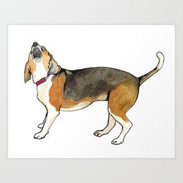 Chipper the beagle Art Print