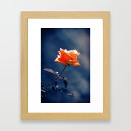 Rose Flower Framed Art Print
