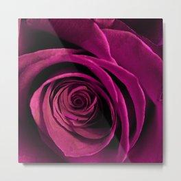 Lilac rose(2) Metal Print