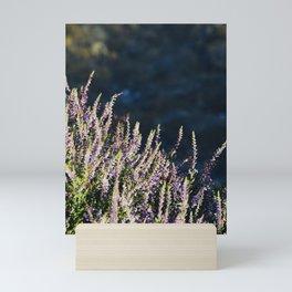Highland Gem 2 | Musical Crime Productions | Highland Photography Mini Art Print