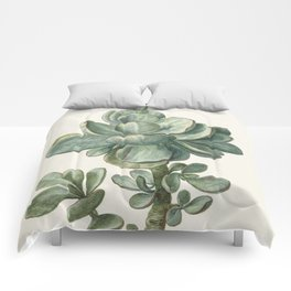 Herman Saftleven - Succulent (probably a Cotyledon orbiculata) - 1683 Comforters