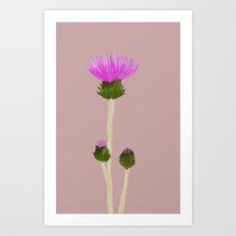 Cirsium Arvense Art Print