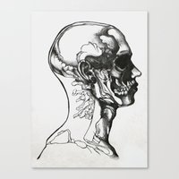 anatomy Canvas Prints featuring Anatomy  by Cjillustrations