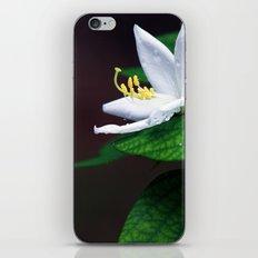 drop that flower iPhone & iPod Skin