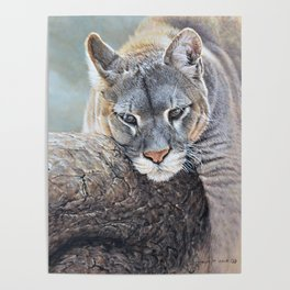 Just Chillin - Cougar Painting by Alan M Hunt Poster