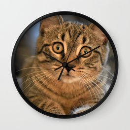 The Beauty of a Cat Wall Clock