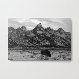 Bison and the Tetons Metal Print