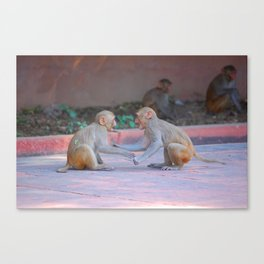 Monkey Fight Canvas Print