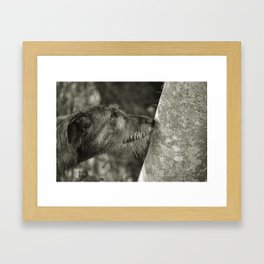 Irish Wolfhound Framed Art Print