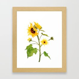 One sunflower watercolor arts Framed Art Print