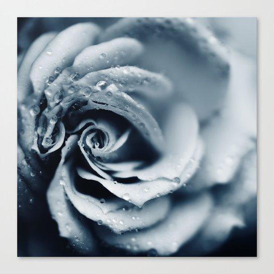 Rose - powder blue Canvas Print