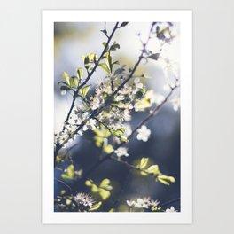 Backlight Blooms Art Print