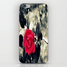 Red Rose iPhone & iPod Skin