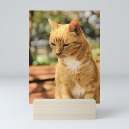 Red Guy (Lanai Cat Sanctuary) Mini Art Print