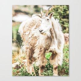 Wild Goat // White Fur Profile Picture Shot at Yosemite National Park Canvas Print