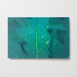 Papaya leaf morphology Metal Print