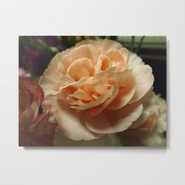 Peach Carnation Metal Print