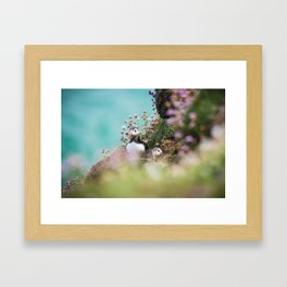 RR(288) Puffins Framed Art Print