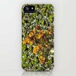 Mylor Creek - Gorse Bush iPhone Case