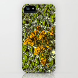 Mylor Creek - Gorse Bush iPhone Case