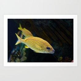 Spotted Fish Aquatic Animal / Wildlife Photograph Art Print