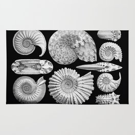 Sea Shells and Fossils (Ammonitida) by Ernst Haeckel Rug