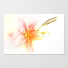 Pink and Yellow Tiger Lily - Dreamy Floral Photography - Flower Art Prints, T-shirts, Phone Cases... Canvas Print