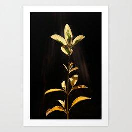Lit by the Sunbeams Art Print