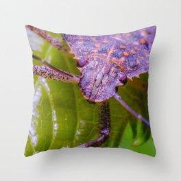 Marmorated Stink Bug. Macro Photograph Throw Pillow