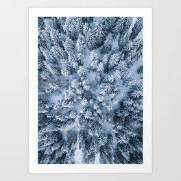 Winter Pine Forest Kunstdrucke
