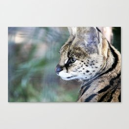 Serval Cat Canvas Print