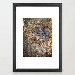 Close-up Elephant eye Framed Art Print